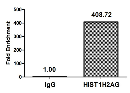 Chromatin Immunoprecipitation(ChIP) - Acetyl-HIST1H2AG (K36) Antibody
