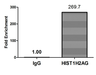 Chromatin Immunoprecipitation(ChIP) - HIST1H2AG (Ab-36) Antibody