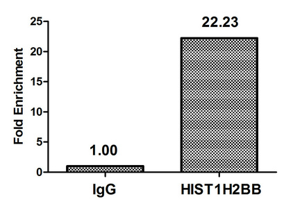 Chromatin Immunoprecipitation(ChIP) - Acetyl-HIST1H2BB (K5) Antibody