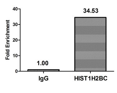 Chromatin Immunoprecipitation(ChIP) - Acetyl-HIST1H2BC (K108) Antibody