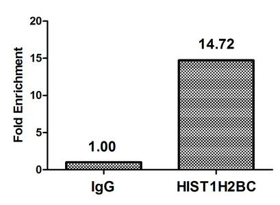 Chromatin Immunoprecipitation(ChIP) - HIST1H2BC (Ab-108) Antibody