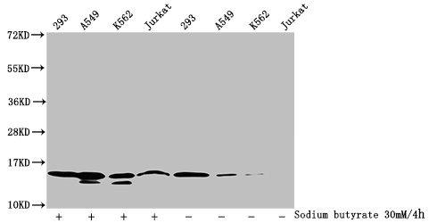 Western Blotting(WB) - Formyl-HIST1H2BC (K116) Antibody