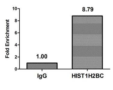 Chromatin Immunoprecipitation(ChIP) - HIST1H2BC (Ab-120) Antibody