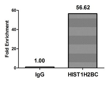 Chromatin Immunoprecipitation(ChIP) - Mono-methyl-HIST1H2BC (K12) Antibody