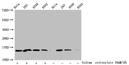 Western Blotting(WB) - Crotonyl-HIST1H2BC (K16) Antibody