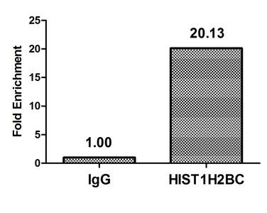 Chromatin Immunoprecipitation(ChIP) - Mono-methyl-HIST1H2BC (K20) Antibody