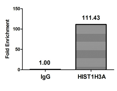 Chromatin Immunoprecipitation(ChIP) - Acetyl-HIST1H3A (K4) Antibody