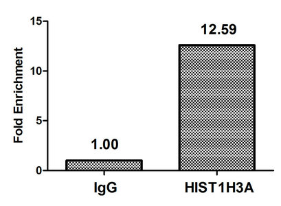 Chromatin Immunoprecipitation(ChIP) - HIST1H3A (Ab-4) Antibody
