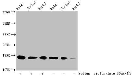 Western Blotting(WB) - Crotonyl-HIST1H3A (K9) Antibody