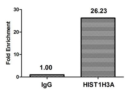 Chromatin Immunoprecipitation(ChIP) - HIST1H3A (Ab-10) Antibody