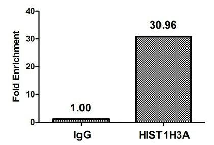 Chromatin Immunoprecipitation(ChIP) - HIST1H3A (Ab-14) Antibody