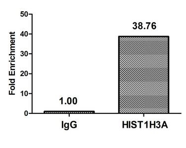 Chromatin Immunoprecipitation(ChIP) - Crotonyl-HIST1H3A (K18) Antibody