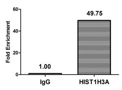 Chromatin Immunoprecipitation(ChIP) - HIST1H3A (Ab-23) Antibody