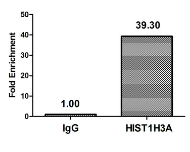 Chromatin Immunoprecipitation(ChIP) - HIST1H3A (Ab-23) Antibody