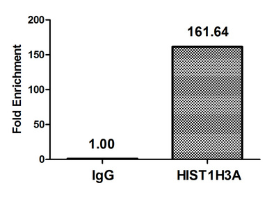 Chromatin Immunoprecipitation(ChIP) - HIST1H3A (Ab-27) Antibody