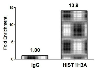 Chromatin Immunoprecipitation(ChIP) - HIST1H3A (Ab-36) Antibody