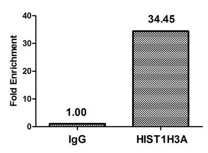 Chromatin Immunoprecipitation(ChIP) - Acetyl-HIST1H3A (K37) Antibody