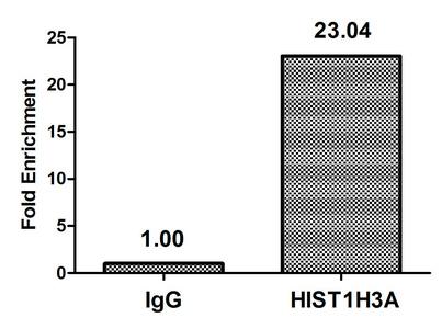 Chromatin Immunoprecipitation(ChIP) - Phospho-HIST1H3A (T80) Antibody