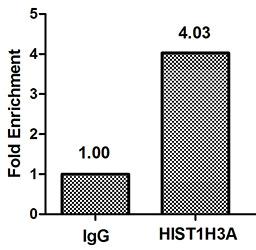 Chromatin Immunoprecipitation(ChIP) - HIST1H3A (Ab-4) Antibody