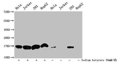 Western Blotting(WB) - Acetyl-HIST1H3A (K9) Antibody