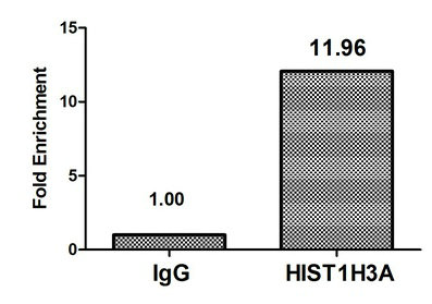 Chromatin Immunoprecipitation(ChIP) - HIST1H3A (Ab-17) Antibody