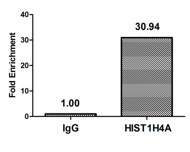 Chromatin Immunoprecipitation(ChIP) - HIST1H4A (Ab-8) Antibody