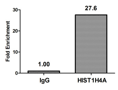 Chromatin Immunoprecipitation(ChIP) - Acetyl-HIST1H4A (K12) Antibody