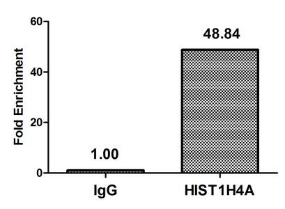 Chromatin Immunoprecipitation(ChIP) - HIST1H4A (Ab-12) Antibody
