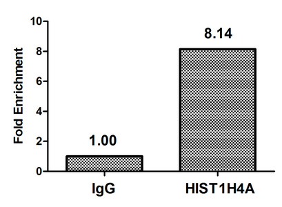 Chromatin Immunoprecipitation(ChIP) - HIST1H4A (Ab-16) Antibody
