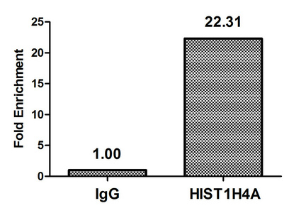 Chromatin Immunoprecipitation(ChIP) - HIST1H4A (Ab-31) Antibody