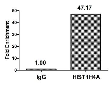 Chromatin Immunoprecipitation(ChIP) - Acetyl-HIST1H4A (K79) Antibody