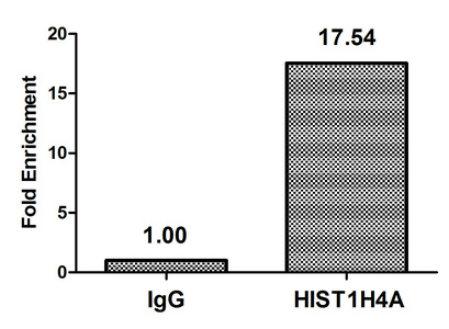Chromatin Immunoprecipitation(ChIP) - HIST1H4A (Ab-79) Antibody