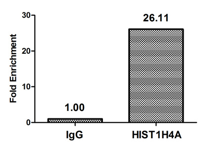 Chromatin Immunoprecipitation(ChIP) - HIST1H4A (Ab-91) Antibody