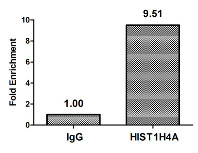 Chromatin Immunoprecipitation(ChIP) - Acetyl-HIST1H4A (K5) Antibody