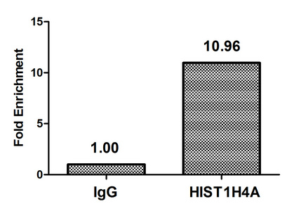 Chromatin Immunoprecipitation(ChIP) - Acetyl-HIST1H4A (K16) Antibody