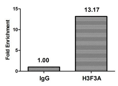 Chromatin Immunoprecipitation(ChIP) - Di-methyl-H3F3A (K79) Antibody