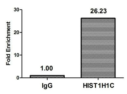Chromatin Immunoprecipitation(ChIP) - 2-hydroxyisobutyryl-HIST1H1C (K116) Antibody