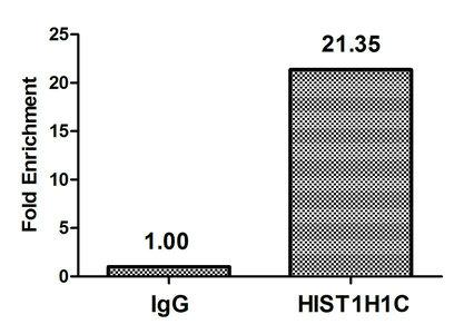 Chromatin Immunoprecipitation(ChIP) - 2-hydroxyisobutyryl-HIST1H1C (K158) Antibody