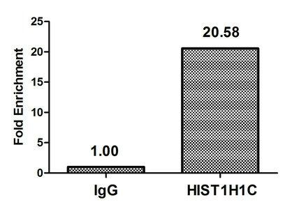 Chromatin Immunoprecipitation(ChIP) - Acetyl-HIST1H1C (K74) Antibody