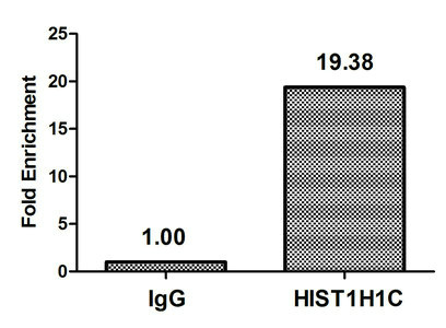 Chromatin Immunoprecipitation(ChIP) - Formyl-HIST1H1C (K74) Antibody