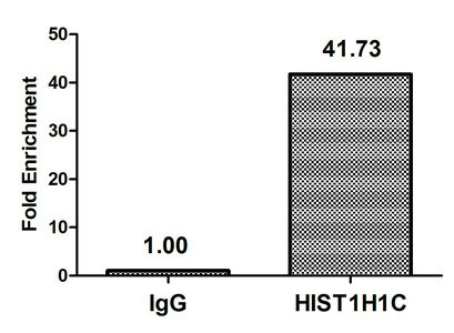Chromatin Immunoprecipitation(ChIP) - 2-hydroxyisobutyryl-HIST1H1C (K80) Antibody