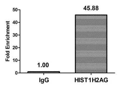 Chromatin Immunoprecipitation(ChIP) - HIST1H2AG (Ab-118) Antibody