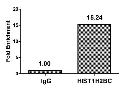 Chromatin Immunoprecipitation(ChIP) - Butyrly-HIST1H2BC (K5) Antibody