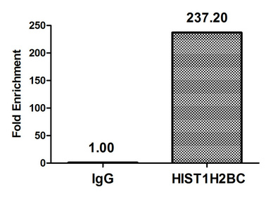 Chromatin Immunoprecipitation(ChIP) - Acetyl-HIST1H2BC (K20) Antibody