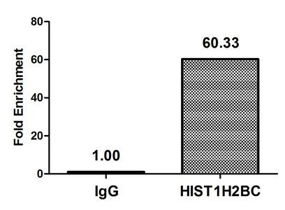 Chromatin Immunoprecipitation(ChIP) - Crotonyl-HIST1H2BC (K23) Antibody