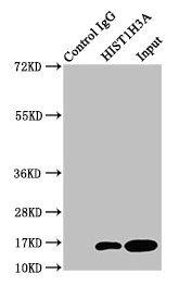 Immunoprecipitation(IP) - HIST1H3A (Ab-3) Antibody