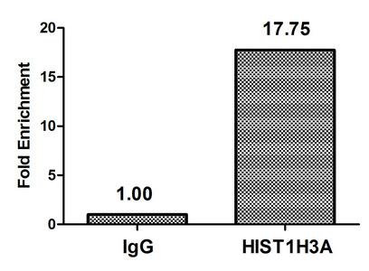 Chromatin Immunoprecipitation(ChIP) - Phospho-HIST1H3A (T3) Antibody