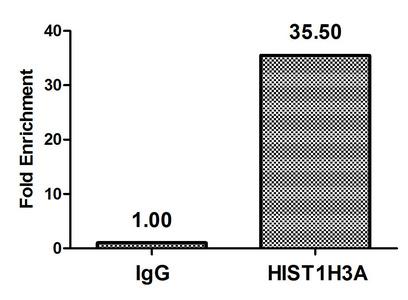 Chromatin Immunoprecipitation(ChIP) - β-hydroxybutyryl-HIST1H3A (K4) Antibody