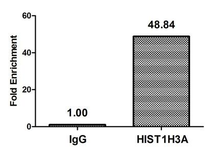 Chromatin Immunoprecipitation(ChIP) - β-hydroxybutyryl-HIST1H3A (K9) Antibody