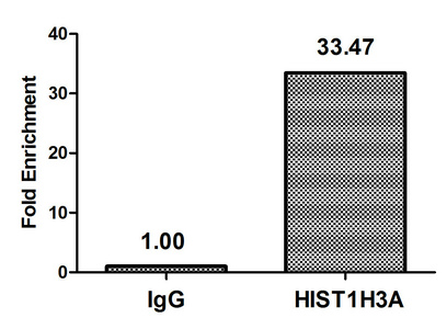 Chromatin Immunoprecipitation(ChIP) - Crotonyl-HIST1H3A (K9) Antibody